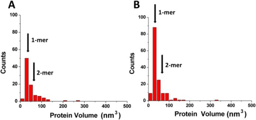 Results of the volume measurements of A3A complexed with gap-DNA (A) alone (B).Numbers of complexes analyzed are N = 118 for (A) and N = 148 for (B). The mean volume values (± SD) for monomers (1-mers; 33±16 nm3) and dimers (2-mers; 66±26 nm3) are indicated with arrows.