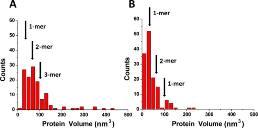 Volume measurements for A3AE72A complexed with gap-DNA (A) and alone (B).Number of complexes analyzed were 167 and 140 for histograms (A) and (B) respectively. The mean volume values for monomers (1-mers; 33±14 nm3), dimers (2-mers; 66±24 nm3) and trimers (3-mers; 99±34 nm3) are indicated with arrows.