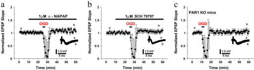 Blockade of either thrombin or PAR1 fails to induce iLTP in acute hippocampal slices.A brief exposure (3 minutes) to OGD in presence of either (a) 1 μM of the thrombin inhibitor α-NAPAP or (b) 1 μM of the PAR1 antagonist SCH797977 fails to induce iLTP. (c) A brief exposure to OGD (3 minutes) fails to induce iLTP in PAR1−/− mice. Averaged EPSPs are plotted versus time. Representative traces at indicated times (a, b) are shown for each section.
