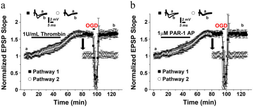 Previous exposures to thrombin or PAR1-AP occlude the induction of later iLTP.Either (a) 1 U thrombin or (b) 1 μM PAR1-AP induce a slow onset LTP and saturate the induction of further potentiation upon brief exposure (3 minutes) to OGD. Averaged EPSPs are plotted versus time. Representative traces at indicated times (a, b) are shown for each section.