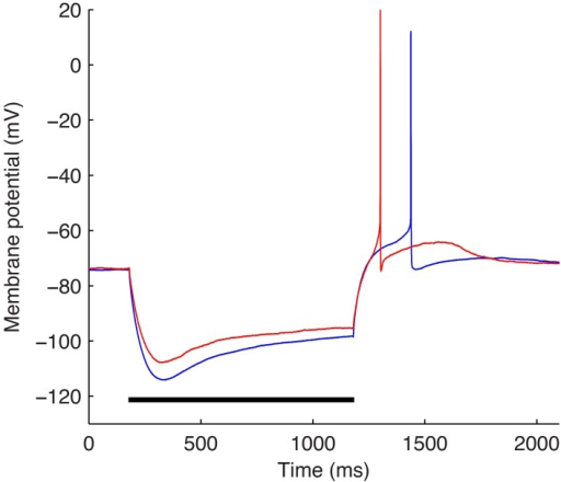 The two experimental O-LM cell somatic membrane potential traces used in the optimization work. Somatic membrane voltage response to a −90 pA hyperpolarizing current injection step for two experimental O-LM cells: cell 4525#4 (blue) and cell 4610#2 (red). Horizontal black bar shows time of application of −90 pA current injection step.