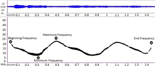 Spectrogram of a dolphin's whistle.Parameters considered in the study are pointed out. All the sounds showing both a strong signal to noise ratio and not overlap with other vocalisations were extracted. The presence of a whistle was also identified by analyzing the SPLs in the one third octave bands of the signals: we considered the signals when the SPLs were higher of at least 20 dB. We measured four signal parameters for each whistle: beginning frequency, end frequency, minimum frequency and maximum frequency.