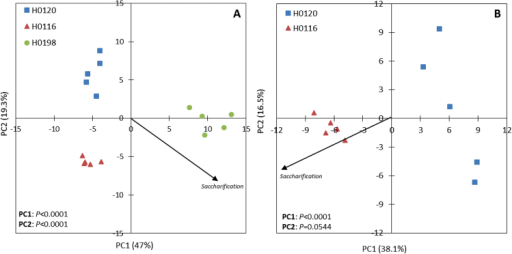 Principal component analysis (PCA) of the cell wall variables that showed statistically significant differences according to GLM results (P<0.05). (A) Data from the three genotypes showing the saccharification vector separating mainly the H0198 genotype from the others at PC1. (B) Data from H0120 and H0116 genotypes (both inversely correlated with lignin content) showing the saccharification vector at PC1. P-values indicate statistically significant differences of PCs. (This figure is available in colour at JXB online.)