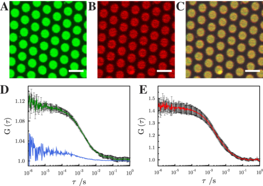 Fluorescence micrographs of pore-spanning membranes composed of DOPC/POPE/POPS/cholesterol (5:2:1:2) on a 6-mercapto-1-hexanol functionalized gold covered porous silicon nitride surface.The images show fluorescence signals of (A) Atto488 DPPE, (0.01 mol%), (B) Atto647N-syntaxin 1 transmembrane domain (0.0055 mol%) and (C) an overlay of (A) and (B). Scale bars: 3 μm. Autocorrelation curves of the performed FCS measurements with excitation wavelengths of 488 nm (Atto488 DPPE, green, D) and 633 nm (Atto647N-syntaxin 1-TMD, red, E). The blue FCS curve in D was obtained on a gold covered pore rim showing that the fluorescence of Atto488 DPPE is significantly quenched and hence, the diffusion constant cannot be determined. Fitting eq. (4) to the autocorrelation curves provide diffusion coefficients of 7.7 ± 0.4 μm2/s (SD) for Atto488 DPPE and 3.4 ± 0.2 μm2/s (SD) for Atto647N-syntaxin 1-TMD. For Atto488-DPPE L was 200 nm, and for Atto647N-syntaxin 1A L was 250 nm. For each diffusion constant, at least 20 pore-spanning membranes from three independent reconstitutions were analyzed.