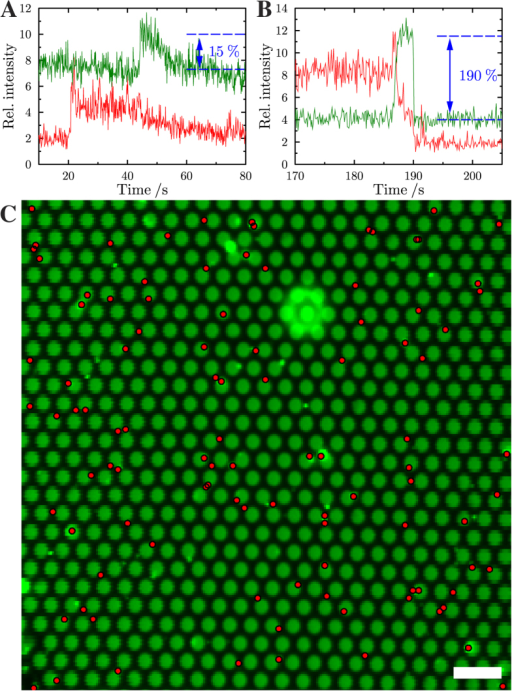 Time resolved changes in fluorescence intensity of Oregon Green DHPE (green) and Texas Red DHPE (red) during (A) a fusion event occurring in the center of the pore-spanning membrane and (B) occurring with a pore-spanning membrane attached to the pore rim. (C) Averaged Oregon Green fluorescence image. The red dots mark the positions of the centers of mass of the docked vesicles. Scale bar: 4 μm.
