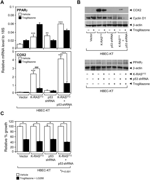 Functional evaluation of PPARγ in immortalized HBECs.(A) PPARγ and COX2 mRNA expression was measured using QPCR assay in HBEC lines with or without troglitazone treatment. (B) Immunoblots using antibodies against COX2, cyclin D1, PPARγ or beta-actin were used to measure the corresponding protein expression in the HBEC panel when treated or not treated with 1 μM of troglitazone. (C) Growth response of HBEC-KT cell lines to the combined treatment of PPARγ ligand troglitazone (3 μM) and RXR ligand LG268 (100 nM). Data represent the mean ± SD (n = 3). Asterisks show statistically significant points as evaluated by ANOVA. *P < 0.05, **P < 0.01 and ***P < 0.001 compared to HBEC-KT control, ###P < 0.001 compared to K-rasV12 control, +++P < 0.001 compared to K-rasV12+p53shRNA control.