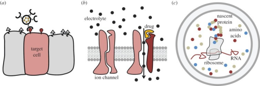 Application of model-membrane systems. (a) Functionalized liposomes filled with pharmaceutical compounds can be used for targeted drug delivery. (b) Lipid bilayer systems with reconstituted transmembrane proteins, e.g. ion channels, offer high throughput in the screening of compounds that are modulating the gating of these channels. (c) Confining in vitro protein synthesis in the small volume of GUVs allows for straightforward production of highly concentrated products without the need for prolonged purification.