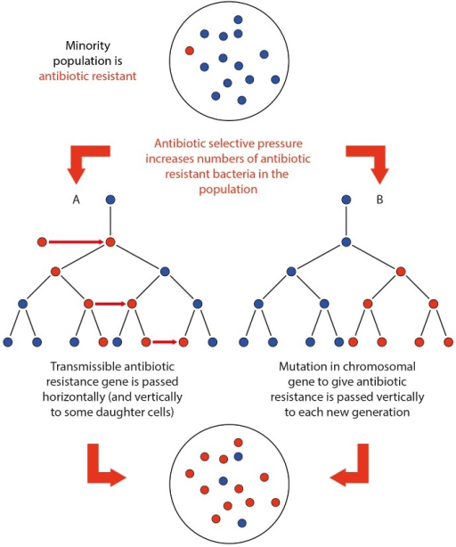 an analysis of the origin of antibiotics and the antibiotic resistance in bacteria