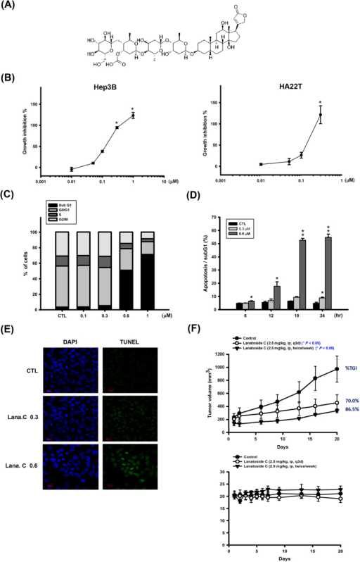 Effect of lanatoside C on cell proliferation, cell cycle of HCC cell lines, and Hep3B xenograft model.(A) Structure of lanatoside C. (B) Hep3B and HA22T cells were exposed to lanatoside C for 48 h, and then detected % of control cell growth by SRB assay. Lanatoside C induced Hep3B cell apoptosis in a concentration-dependent (C) and time-dependent (D) manner by FACScan flow cytometry analysis with propidium iodide (PI) staining. (E) Hep3B cells were incubated with lanatoside C in indicated concentration for 18 hr. Cells were stained with TUNEL assay (green fluorescence) and DAPI (blue fluorescence) in the same area. Magnification of TUNEL staining was 200X. (F) SCID mice were ectopically implanted with Hep3B cells. The upper curves show the effect of lanatoside C (2.5 mg/kg, ip, q3d or 2.5 mg/kg, ip, twice a week) on tumor volume and percentage of tumor growth delay (TGD), which was calculated for treatment groups relative to control group; the lower curves show the body weight of mice after indicated treatment. Data are expressed as means ± SEM of three independent determinations. *P < 0.05 and **P < 0.01, untreated cell versus lanatoside C-treated groups.