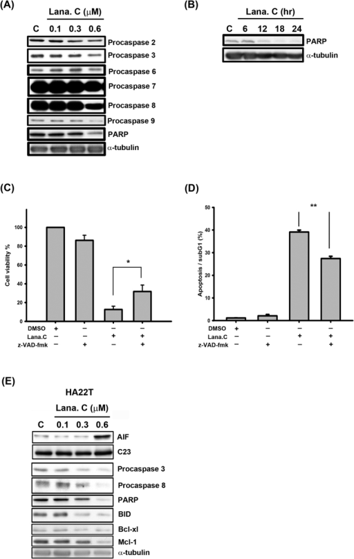 Lanatoside C induced apoptosis in HCC cells.(A) Hep3B cells were treated with the indicated concentrations of lanatoside C (0.1–0.6 μM) for 18 h and detected of procaspase-2, -3, -6, -7, -8, -9 and PARP protein expressions by using Western blot analysis. (B) Hep3B cells were treated with lanatoside C (0.6 μM) for the indicated time (6–24 h), and cells were harvested from total lysates for detection of PARP protein expressions by using Western blot analysis. Data are representative of three independent experiments. (C and D) Hep3B cells were incubated in 0.6 μM lanatoside C with or without 100 μM z-VAD-fmk for 24 h. (C) The cell viability was determined by using MTT assay as described in methods. Data are repeated at least three independent determinations. *P < 0.05. (D) The apoptotic cells were stained with PI and analyzed by flow cytometry as described in methods. Data are repeated at least three independent determinations. **P < 0.01. (E) HA22T cells were treated with lanatoside C for 18 h to detect the expressions of caspases and mitochondrial proteins.