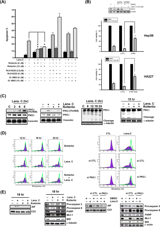 Activation of PKCδ was involved in lanatoside C-induced apoptosis.(A) Hep3B cells were incubated with different PKC inhibitors (Ro318220: pan-PKC inhibitor, Gö 6983: classical PKC inhibitor, and Rottlerin: PKCδ inhibitor) for 18 h and subsequently analyzed by FACScan flow cytometry with PI staining to determine their sub-G1 proportion. Data are expressed as means ± SEM of three independent determinations. *P < 0.01 and **P < 0.05, untreated cell versus lanatoside C-treated cells. (B) Hep3B and HA22T cells were transfected with PKCδ or control siRNA, followed by treatment with lanatoside C (0.6 μM) for 18 h. Cell viability was determined by MTT assay. (C) Hep3B cells were treated with lanatoside C (0.6 μM) or co-incubated with rottlerin (5 μM) for the indicated time and detected of PKCδ Thr505 in membrane fraction and PKCδ from total lysates by Western blot analysis. Caveolin was a membrane marker protein and α-tubulin used as internal control. (D) Hep3B cells were treated with lanatoside C (0.6 μM), rottlerin (left panel) or PKCδ siRNA (right panel), or combination treatment for 18 h and then incubated with rhodamine123 (5 μM) for 30 min. Data acquisition and analysis were performed on a FACScan flow cytometry. (E) Hep3B Cells were incubated with Lanatoside C (0.6 μM), rottlerin (5 μM) or PKCδ siRNA, or combination treatment for 18 h. Cells were harvested from nuclear fraction and total lysates for detection of the indicated protein expressions by using Western blot analysis. C23 was a nuclear marker protein used as internal control. Results are representative of three independent experiments.