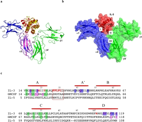 Modeling of the IL-3:receptor complex.(A) The structure of IL-3 (red) is superimposed on that of GM-CSF (yellow). The IL-3 receptor alpha chain domain 2 (α2, blue) is superimposed on the corresponding domain of GM-CSF receptor alpha chain (light magenta). The position of IL-3 receptor alpha chain domain 1 (α1, blue) is fitted as described in text. Domain 1 of one beta subunit (β1) and domain 4 of the other (β4′) are shown in green. The rest of the beta dimer is not shown. The three interfaces of the complex discussed in the text are labeled. The color scheme is used throughout the illustration unless otherwise indicated; (B) The resulting model of the IL-3:receptor complex after removing GM-CSF and its receptor alpha subunit, shown in ribbon covered with transparent surface; (c)sequence alignment of IL-3, GM-CSF and IL-5. Helices in IL-3 are indicated by horizontal bar in red. Residues discussed in the text are highlighted in different colors: green shade, residues interacting with the receptor β-subunit in IL-3 and GM-CSF; blue shade, residues of IL-3 that interact with the receptor α-subunit; magenta shade, residues of GM-CSF that interact with the receptor α-subunit; red font, functionally important residues from mutagenesis studies. Boxed residues are involved interface V interaction. Residue numbering above the sequence is for IL-3.