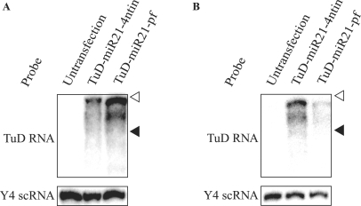 Detection of TuD RNA molecules by northern blotting. TuD RNA expression plasmid vectors were transfected into PA-1 (A) or HCT-116 (B) cells and TuD-miR21-4ntin and TuD-miR21-pf were detected by northern blotting. The positions of Y4 scRNA (93 nt) and ACA1 snoRNA (130 nt) are indicated by black and open triangles, respectively. Y4 scRNA was served as a loading control.