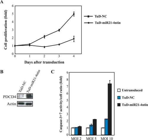 Biological effects induced by TuD RNA. (A) Inhibition of endogenous miR-21 function induces growth suppression and apoptosis. Cell growth assay was performed after PA-1 cells were transduced with lentivirus vectors expressing either TuD-miR21-4ntin or TuD-NC at an MOI of 10. Cell proliferation was monitored by ATPase based assays and normalized to those of untransduced PA-1 cells on Day 0 and are represented by the mean ± SEM (n = 3). (B) Effects of transduced TuD RNA expression lentivirus vectors upon the expression of endogenous PDCD4 protein, a target of miR-21. PA-1 cells were transduced with the TuD RNA expression lentivirus vectors with an MOI of 10 and total proteins were prepared 20 h after transduction. PDCD4 (top) as well as the β-actin loading control (bottom) were detected by western blotting. (C) Caspase-3 + 7 activation was assayed 48 h after transduction with indicated TuD RNA expression lentivirus with an MOI of 2, 5 and 10. Caspase-3 + 7 activity levels/cell was normalized to that of untransduced PA-1 cells and are represented by the mean ± SEM (n = 3).