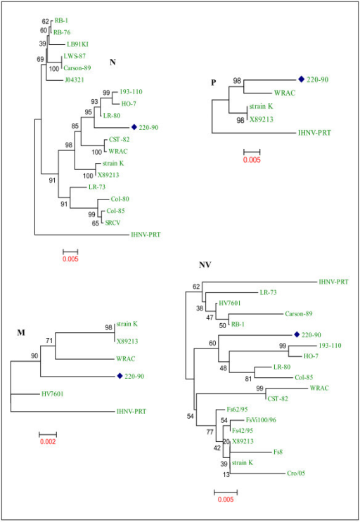 Phylogenetic tree analysis of sequences of nucleocapsid (N), matrix (M), phosphoprotein (P), and non-virion protein (NV) of various IHNV strains. Information about the IHNV strains used in this analysis is described in additional file 1. IHNV 220-90 strain is marked with blue diamond. Phylogenetic tree analysis was conducted by neighbor-joining method using 1000 bootstrap replications. The scale at the bottom indicates the number of substitution events and bootstrap confidence values are shown at branch nodes.