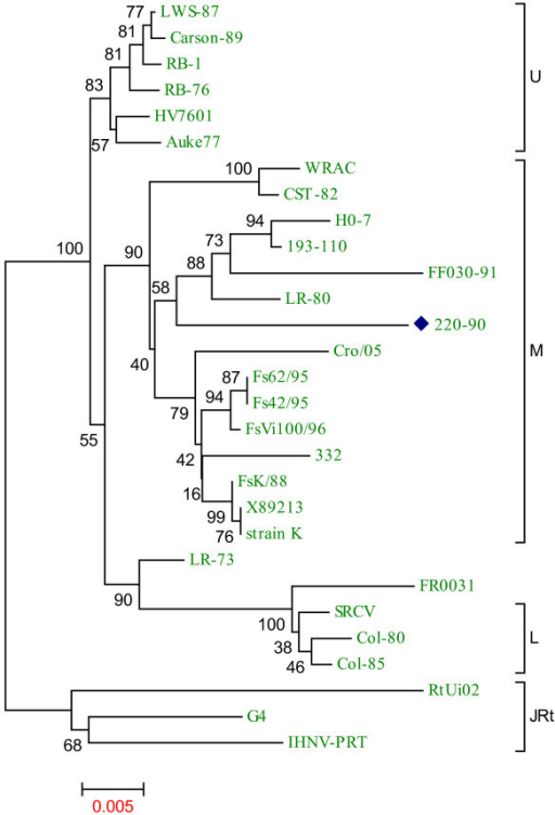 Phylogenetic relationship of the full-length glycoprotein (G) sequences of 28 IHNV strains with IHNV 220-90. Genogroups are depicted by vertical lines, as described by [10]. Brackets indicate the three major genogroups, U, M and L. IHNV 220-90 (blue diamond) is grouped under M genogroup. Data of virus isolates used here are available in additional file 1. Phylogenetic tree analysis was conducted by neighbor-joining method using 1000 bootstrap replications. The scale at the bottom indicates the number of substitution events and bootstrap confidence values are shown at branch nodes.