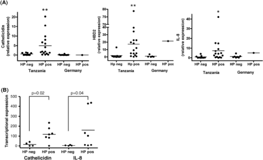 Expression of cathelicidin mRNA, interleukin-8 (IL-8) and beta-defensin 2 (hbd2) in biopsies.From the gastric antrum (A) and corpus/fundus (B) of African and German patients. Data were correlated with helicobacter pylori (HP) infection status. Levels are normalized to glyceraldehydes-3-phosphate dehydrogenase (GAPDH). Data are expressed as ∼fold change in mRNA transcript levels relative to German subjects. Horizontal bars represent median cathelicidin expression. Cathelicidin and hbd2 levels were significantly increased in HP positive compared with HP negative patients. The inflammatory status measured by IL-8 expression correlated well with the HP infection status.