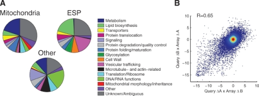 Generation of the MITO-MAP. (A) Manually defined functional annotations for genes included in the MITO-MAP are summarized in pie charts: 592 genes whose products are predicted to localize to the mitochondria, 437 genes whose products are predicted to localize to the early secretory pathway (ESP), and 529 other genes. Localization groups were based on systematic results with GFP-tagged proteins and GO Slim component annotations. (B) Scatter plot of all full biological replicate genetic interaction score (S-score) measurements for double mutants generated from each of the two possible query-array parent strain combinations. The Pearson correlation for these replicates was 0.65.