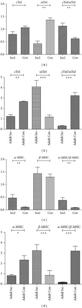 mRNA expressions of cTnI, ssTnI, α-MHC, and β-MHC expression in fetal Iso2, fetal Con, adult Iso, and adult Con hearts as quantified by real-time PCR. (a) For troponin I of fetuses, (b) for MHC of fetuses, (c) for troponin I of adults, and (d) for MHC of adults. Individual gene expression was normalized to GAPDH mRNA and displayed as a percent of control. ∗P < 0.05, ∗∗P < 0.01, ∗∗∗P < 0.0001. n = 9/group, while n = 8 for adult Iso group.