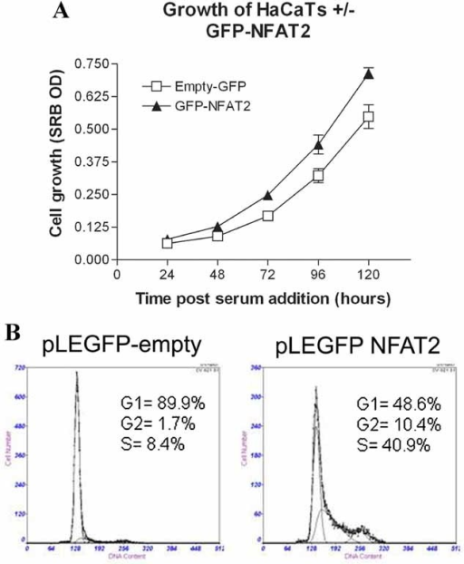 Overexpression of NFAT2 induces keratinocyte proliferation. A: HaCaT keratinocytes synchronized in G1 were retrovirally transduced with either pLEGFP empty or pLEGFP-NFAT2 and proliferation assessed by SRB assay. Two-way ANOVA analysis showed a significant difference in proliferation between the pLEGFP empty and the pLEGFP-NFAT2 groups (P = 0.008) and a significant difference in proliferation over time (P < 0.001), two independent experiments with 12 replicates. B: Synchronized HaCaT keratinocytes were retrovirally transduced with either pLEGFP empty or pLEGFP-NFAT2 and cell cycle progression was assessed by flow cytometry. At 24 h there was an increase in the percentage of cells in S phase in the pLEGFP-NFAT2 group.