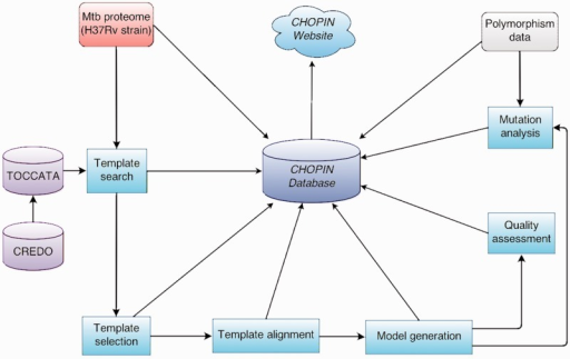 Overview of the CHOPIN modelling pipeline.