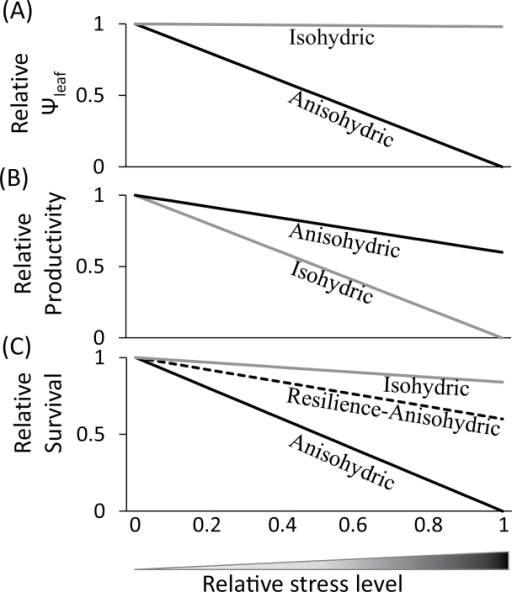Conceptual model for behaviour of isohydric versus anisohydric plants by means of regulating (A) Ψleaf, (B) productivity, and (C) survival in response to increasing relative water stress, which accounts for changes in the SWCg and the period of time water stress was applied (this figure is available in colour at JXB online).