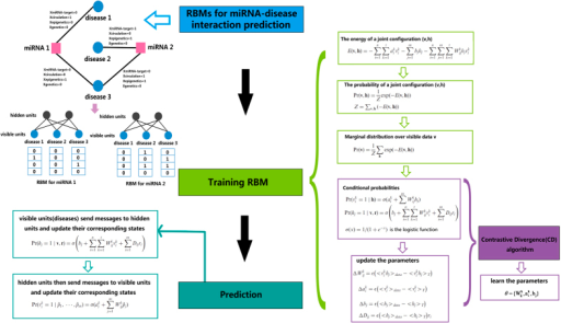 Flowchart of RBMMMDA, demonstrating the basic ideas of predicting multiple types of disease-miRNA association in the framework of RBM, which includes the basic there steps: constructing RBMs from a disease-miRNA interaction network; training RBM by CD algorithm; implementing prediction by computing conditional probabilities.