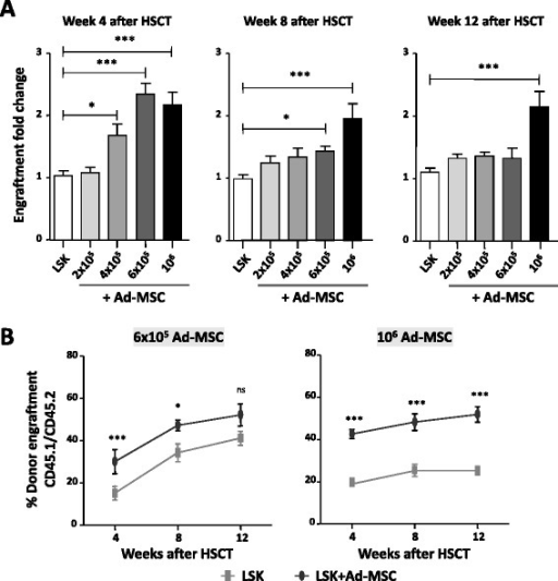 Ad-MSC dose-dependent effect on HSC engraftment transplanted into congenic recipients conditioned with moderate radiation. a Fold-increase of donor hematopoietic engraftment in peripheral blood of 5 Gy-irradiated recipient mice transplanted with 1500 LSK cells co-infused with increasing numbers of Ad-MSCs. b Evolution of peripheral blood donor engraftment in the peripheral blood of recipient mice co-infused with 1500 LSK plus 6×105 or 106 Ad-MSCs. Data obtained at 4, 8, and 12 weeks post-transplantation are shown. Bars represent standard error of the mean. *P ≤ 0.05. ***P ≤ 0.001. Ad-MSC adipose tissue-derived mesenchymal stem cell, HSC hematopoietic stem cell, HSCT hematopoietic stem cell transplant, LSK lineage− Sca-1+ cKit+, ns non-significant difference