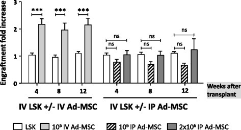 Influence of Ad-MSC administration route on the engraftment of purified HSCs. Donor cell engraftment (fold increase) in the peripheral blood of recipient mice intravenously infused with 1500 LSK cells (white bars), with intravenous co-infusion of 106 Ad-MSCs (gray bars), or with intraperitoneal injection of 106 (striped bars) or 2×106 (dark gray bars) Ad-MSCs. Bars represent standard error of the mean. ***P ≤ 0.001. Ad-MSC adipose tissue-derived mesenchymal stem cell, HSC hematopoietic stem cell, IP intraperitoneal injection, IV intravenous infusion, LSK lineage− Sca-1+ cKit+, ns non-significant difference