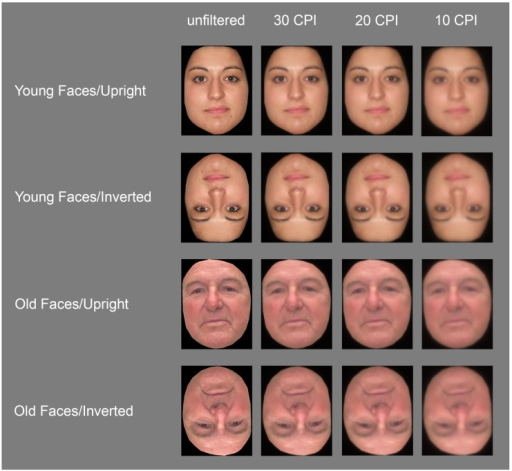 Examples of the face stimuli used in the present experiment.