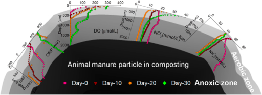 The microprofiles of DO, ORP,  and and the aerobic-anoxic dual structure in the chicken manure during active composting.