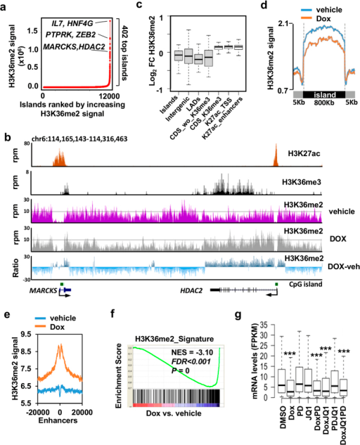 Loss of H3K36me2 correlates with downregulated genes after NSD2 knock down.(a) Top H3K36me2 islands in vehicle treated cells identified using ROSE. (b) Gene tracks of H3K36me2 signal in presence (dox) or absence (vehicle) of doxycycline. Ratio of H3K36me2 signal in doxycycline minus vehicle treated cells is also shown (Negative light blue values represent loss of signal caused by doxycycline, positive dark blue values represent remaining signal after doxycycline treatment). H3K36me3, H3K27ac signal and CpG islands are also shown. (c) Log2 of fold change (doxycycline vs. vehicle) of H3K36me2 signal at different genomic features located in top H3K36me2 islands. Significance to the fold change was tested using paired two-tailed t test; P = 8.63 × 10−15 in top H3K36me2 islands (islands), P = 5.68 × 10−34 for intergenic regions (intergenic) P = 1.76 × 10−19 for lamina associated domains (LADs), P = 1.44 × 10−15 for coding regions without H3K36me3 (CDS_wo_K36me3), P = 6.531 × 10−101 for regions marked with H3K27ac located at TSSs (K27ac_TSS), P = 1.70 × 10−155 for H3K27ac marked regions not coincident with TSSs (K27ac_enhancers) and P = 4.81 × 10−09 for coding regions with H3K36me3 (CDS_K36me3). (d) Metagene representation of average H3K36me2 density at top H3K36me2 identified in A in the presence of vehicle or doxycycline. The x axis shows the average size of the top H3K36me2 islands flanked by 5 Kb up and down. See Supplementary Table 4 for comparison of H3K36me2 densities at each island in the presence of vehicle or doxycycline. (e) Average density of H3K36me2 −/+20 Kbs around the center of H3K27 acetylated regions not coincident with TSSs (enhancers) in top H3K36me2 islands in H1299 cells transduced with sh3 and treated with doxycycline (Dox) or vehicle. (f ) Gene set enrichment analysis (GSEA) plot showing significant enrichment of top H3K36me2 islands downregulated by dox-associated gene signature (H3K36me2_Signature; Supplementary Table 3) and genes downregulated by doxycycline. (g) Expression of genes on the leading edge of panel F after different treatments. ***p-value < 0.0005 determined by paired t-test comparing each treatment to control (DMSO).