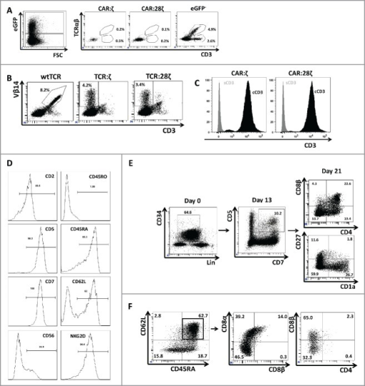 Phenotype and endogenous TCR expression of CD34+ HPC-derived transgenic AR+ T cells. Flow cytometric analysis of the AR-transgenic T cells. (A) CAR-transgenic GFP+ cells of cultures transduced to express either the CAR:ζ or the CAR:28ζ were analyzed on day 26 of OP9-DL1 culture for CD3 and TCRαβ expression. As a control, GFP− cells are shown from the OP9-DL1 culture transduced to express the CAR:ζ (N = 5). (B) Dot plots show CD3 expression of cells from the OP9-DL1 cultures transgenic for the wtTCR, TCR:ζ and TCR:28ζ. Vβ14 staining is used to mark transgene expression, as no GFP is expressed by the transgenic cells (N = 5). (C) Surface and cytoplasmic staining for CD3 of in vitro generated mature T cells that were expanded for one cycle on feeder cells in the presence of cytokines. (D) Expression of various membrane markers by the CD27+CD1a− mature T cells at the end of OP9-DL1 culture (46 d) (N = 2). (E) Day 0: fresh cord blood after MACS CD34 enrichment sorted using the sorting window shown. Day 13: cord blood cells cultured on OP9-DL1 were sorted for CD5 CD7 double positive cells, using the indicated sorting window. The cells were then transduced to express CAR:28ζ and further differentiated on OP9-DL1 feeder layer. Day 21: analysis of the transgenic GFP+ cultured cells for DP cells and CD27+CD1a− mature cells. (F) Flow cytometric analysis of GFP+ CAR:28ζ-transgenic cultures, gated on GFP+ CD27+ CD1a− mature AR+ cells (N = 2).