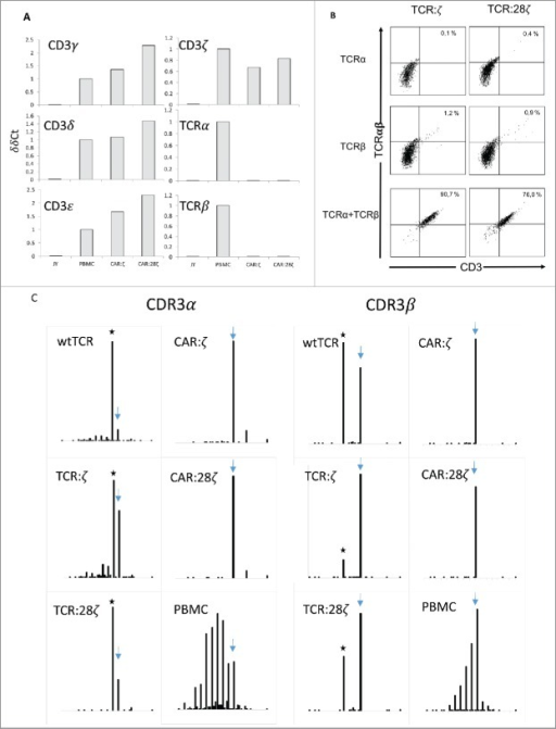 TCRα and TCRβ rearrangements in CD34+ HPC derived transgenic AR+ T cells. (A) Expression of the various components of the CD3/TCRαβ complex at the mRNA level. RT-PCR was performed on the JY B cell line as negative control, on a CAR:28ζ transgenic PBMC-derived T cell line (PBMC) as a positive control and on CAR transgenic HPC-derived cell lines of OP9 cultures transduced to express either the CAR:ζ (CAR:ζ) or the CAR:28ζ (CAR:28ζ). (B) TCR:ζ and TCR:28ζ transgenic CD3-negative HPC-derived T-cell lines were transduced to express the TCRα chain of a CMV-specific TCR and GFP as marker, the TCRβ chain with truncated NGFR as marker or with both TCR chains. Three days later, cells were gated for GFP+, NGFR+ or double positive cells and the CD3/TCRαβ expression was measured. Note that the TCRαβ antibody does not bind CD3-negative TCR:ζ nor TCR:28ζ complex although it binds to wtTCR/CD3 complexes. Percentage CD3/TCR positive cells is indicated in the upper right quadrant. (C) Histograms of read counts per CDR3 nucleotide length. CDR3α and CDR3β histograms are shown for wtTCR, TCR:ζ, TCR:28ζ, CAR:ζ and CAR:28ζ transgenic HPC-derived cell lines and as a control CAR:28ζ transgenic PBMC-derived T-cell line. All samples were spiked with Jurkat T cell line mRNA and CDR3α and CDR3β sequences of each transgenic cell line were determined by next-gen sequencing. Asterisk denotes the CDR3 length of the transgenic reads: CDR3α of 48 nucleotides encoding CAASTSGGTSYGKLTF and CDR3β of 39 nucleotides encoding CASSLGSSYEQYF. Arrow points at the CDR3 length of spiked Jurkat CDR reads: CDR3α of 51 nucleotides encoding CAVSDLEPNSSASKIIF and CDR3β of 48 nucleotides encoding CASSFSTCSANYGYTF).