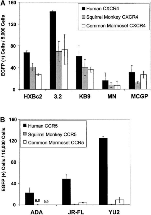Ability of New World monkey chemokine receptors to support HIV-1 entry. Cf2Th cells were cotransfected with (A) human CD4 and human, squirrel monkey, or common marmoset CXCR4, or (B) human CD4 and human, squirrel monkey, or common marmoset CCR5. Recombinant HIV-1 containing the indicated HIV-1 envelope glycoproteins and encoding EGFP was incubated with the cells. 48 h later, EGFP-positive cells were scored. To control for variation in transfection efficiency, the values shown were normalized based on CD4 expression levels determined by Q4120 antibody staining of cell cultures plated in parallel. The entry levels observed in cells expressing human CXCR4 (A) or CCR5 (B) were used as a baseline and all other entry values were multiplied by the percent that their associated CD4 expression level differed from the CD4 expression levels of the reference cells. In the cases where little or no infection was seen, the value is indicated numerically.