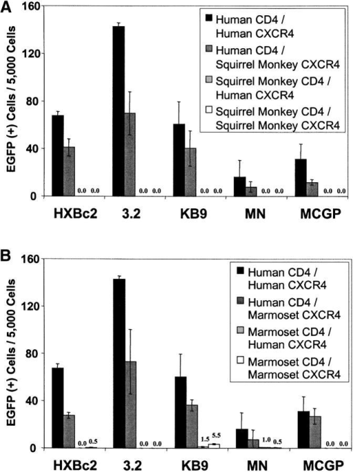 Ability of New World monkey CD4 to support entry of CXCR4-using HIV-1. Cf2Th cells were cotransfected with human CD4 and either human or New World monkey CXCR4, or with New World monkey CD4 and either human or New World monkey CXCR4. Recombinant, EGFP-expressing HIV-1 bearing the indicated CXCR4-using HIV-1 envelope glycoproteins was incubated with the cells, and EGFP-positive cells were scored as described in the Fig. 3 legend. Human receptors were compared with those of squirrel monkeys (A) or common marmosets (B).
