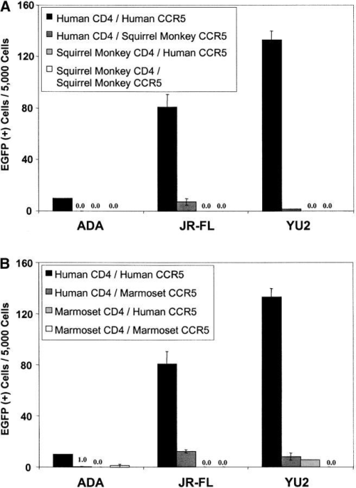 Ability of New World monkey CD4 to support entry of CCR5-using HIV-1. Cf2Th cells were cotransfected with human CD4 and either human or New World monkey CCR5, or with New World monkey CD4 and either human or New World monkey CCR5. Recombinant, EGFP-expressing HIV-1 bearing the indicated CCR5-using HIV-1 envelope glycoproteins was incubated with the cells, and EGFP-positive cells were scored as described in the Fig. 3 legend. Human receptors were compared with those of squirrel monkeys (A) or common marmosets (B).