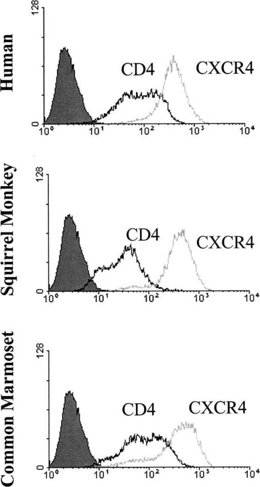 CD4 and CXCR4 expression levels in stable Cf2Th cell lines. Cf2Th cells stably expressing CD4 and CXCR4 of the indicated species were stained with Q4120 antibody (for CD4) and 12G5 antibody (for CXCR4). The 2D7 anti-CCR5 antibody was used as a negative control (shaded peak).