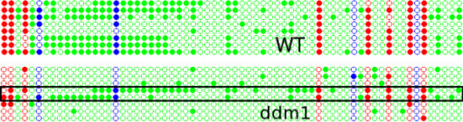 Dot plot for comparison of methylation between WT Col-0 and ddm1 mutant over the AtMu1 5' terminal inverted repeat. Even though the overall methylation is different, two clones appear to retain the WT levels of DNA methylation (boxed region). Figure conventions are the same as in Figure 5.