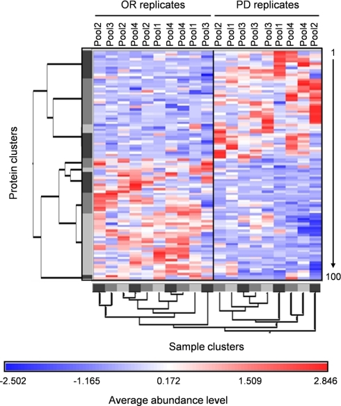 Hierarchical clustering of OR and PD samples. Red and blue colors indicate relative high and low protein abundance, respectively, and white equals median abundance. Gray bars represent sample and protein clusters. The length of the tree arms is inversely correlated with similarity. Proteins are listed vertically from top to bottom and numbered from 1 to 100 in the same order as in Table II.