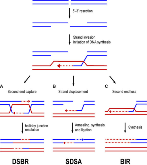 Inherited DNA-Repair Gene Mutations in Men with Metastatic