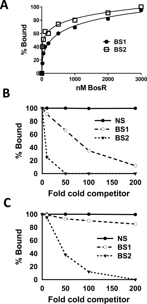 Comparison of the relative affinity of BosR for BS1 (ZM132) and BS2 (ZM127).(A) 30 fmol of labeled probe was incubated with various concentrations of BosR (nM). The membrane containing the bound and unbound DNA was detected using an enzyme immunoassay, and exposed to a Fujifilm LAS-3000 Imager (Fujifilm). Images were analyzed by using the MultiGauge V3.0 software (Fujifilm), and bands were quantified to determine the affinity of BosR for probes. (B) Competition of labeled BS1 (ZM132) with various amounts of unlabeled BS1, BS2, or non-specific (NS) DNA. (C) Competition of labeled BS2 (ZM127) with various amounts of unlabeled BS1, BS2, or NS DNA. In (B) and (C), 100 nM of BosR was used in EMSAs, and bound and unbound DNA was measured as described in (A). NS: non-specific competitor (ZM126).