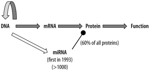 Central Dogma Of Molecular Biology Specific Genetic In Open I