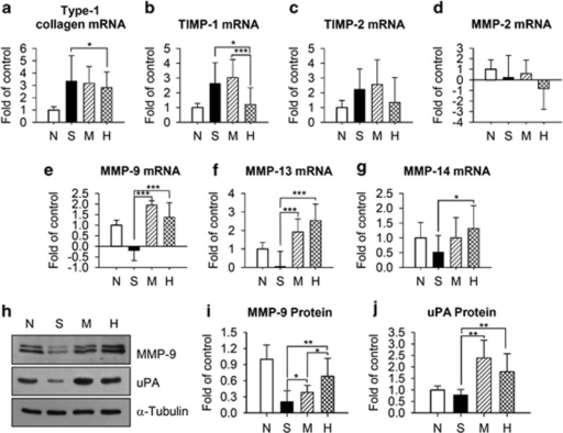 Analysis of the expression of ECM remodeling factors. (a) Type 1 collagen; (b, c) TIMP-1 and -2; and (d–g) MMP-2, -9, -13 and -14 mRNAs were quantified by semiquantitative RT-PCR. (h) MMP-9 and uPA protein levels were evaluated by western blotting and (i, j) quantified by densitometric analysis. Samples were obtained from normal rats, N; control fibrotic animals, S; fibrotic animals transplanted with MSCs, M, or MSCs/HGF, H. Data represent the mean±s.d. for each group. MMP, matrix metalloproteinase; TIMP, tissue inhibitor of matrix metalloproteinase, uPA, urokinase type plasminogen activator (*P<0.05, **P<0.01, ***P<0.005).