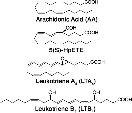 Importantmetabolites of the regulation of inflammation made by5-LOX with AA.