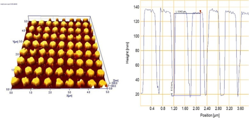 AFM image and profile of the 2-D Au structure on a glass plate.