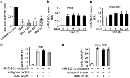 MiR-532-3p is not involved in DOX-induced apoptosis in cancer cells. (a) The miR-532-3p levels in cardiomyocytes, Hela, SGC-7901, SW-480 and HEPG-2 cells. *P<0.05 versus cardiomyocytes. (b and c) The miR-532-3p levels in Hela (b) and SGC-7901 (c) cells treated with 2 μM DOX for the indicated times. (d and e) Cell death in Hela (d) and SGC-7901 (e) cells transfected with miR-532-3p antagomir and treated with 2 μM DOX. Data are expressed as the mean±S.D., n=3