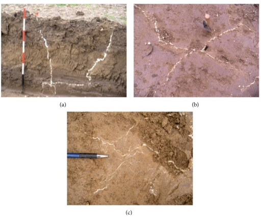 Effects of resin treatment: propagation of resins in clayey soils (a) main conduits along preexisting preferential weakness channels; (b) induced fracturing and spreading on a horizontal plane; (c) dendritic network at millimetric scale.
