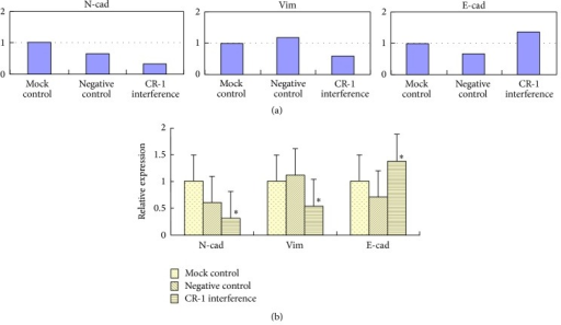 Posttransfection mRNA expression of E-cadherin, N-cadherin, and Vimentin by RT-PCR. (a) RT-PCR findings and (b) relative mRNA expression in the mock control, negative control, and cripto-1 interference groups.