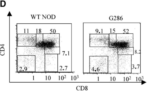 Characterization of G286 mice. (A) Integration of TCR-Vα and -Vβ constructs is shown by genomic PCR. (Left) DNA amplified with TCR-α specific primers from transgene positive (lane 1) and transgene negative (lane 2) mice. (Right) DNA amplified with TCR-β specific primers from transgene positive (lanes 3 and 4) and transgene negative (lane 5) mice. (B) Staining of peripheral blood lymphocytes with antibodies against Vβ8 (x axis) and CD4 (y axis) for NOD littermate (left) and transgene positive (right). (C) Staining of spleen cells from NOD (top) or G286 mice (bottom) with I-Ag7-286 tetramer and CD4 or CD8 (right). As a control, cells were also stained with an I-Ag7 tetramer containing peptide 323–339 of OVA (left). (D) Thymocytes from NOD (left) or G286 (right) mice were stained with antibodies against CD4 and CD8. The percentage of cells in different boxed gates are shown.